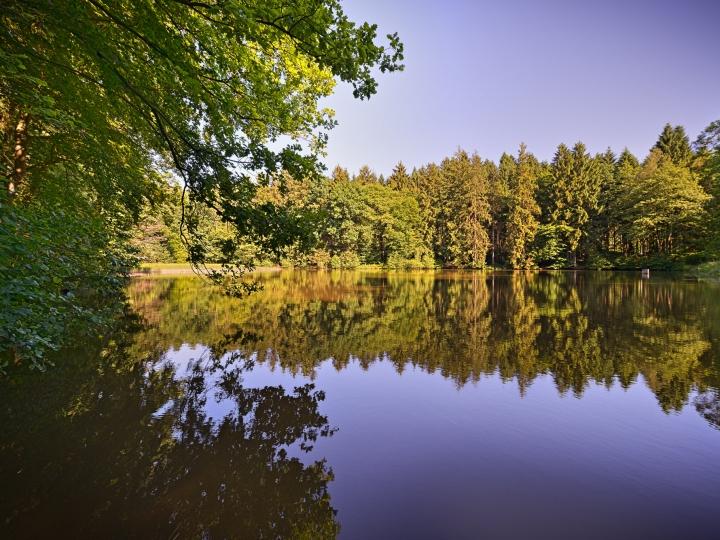 © Achim Meurer, Höhr Grenzhausen Natur, Landshuber Weiher, Westerwald, Wandern, Wald
