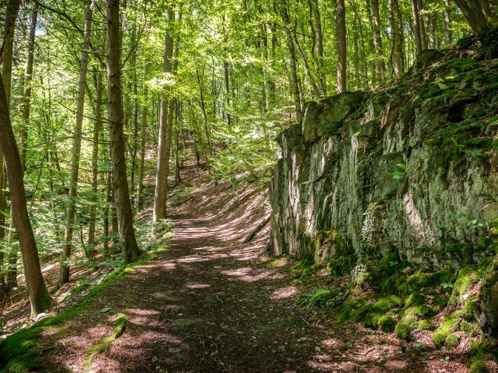 © Achim Meurer, Höhr Grenzhausen Natur, Brexbachtal, Westerwald, Wandern, Wald