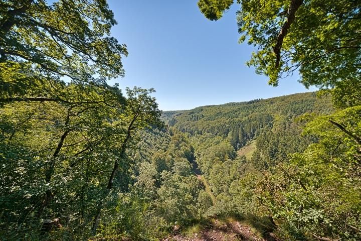 © Achim Meurer, Höhr Grenzhausen Natur, Westerwald, Wald