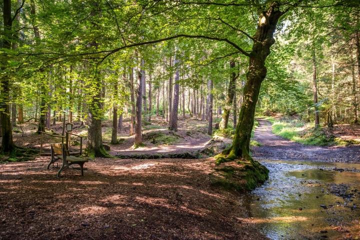 Höhr-Grenzhausen - Natur - Wandern - Wald - Westerwald / Foto: Achim Meurer