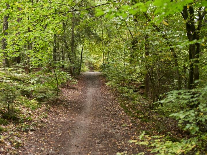 wald, bäume, pfad, waldweg, höhr-grenzhausen, natur, draußen, grün, naturkulturkeramik, natur-kultur-keramik