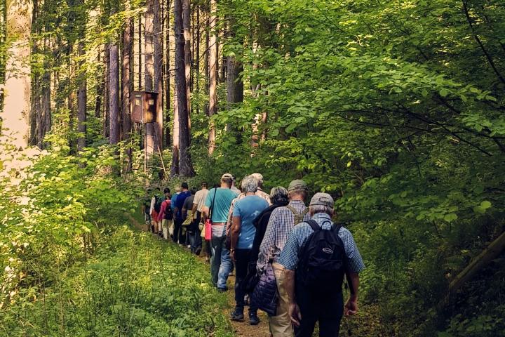 wandern, natur, westerwald, kannenbäckerland, laufen, spazieren, zugbrücke, brexbachtal, wald, grün, bäume, menschen, sportlich, naturkulturkeramik, höhrgrenzhausen, grenzhausen, natur-kultur-keramik