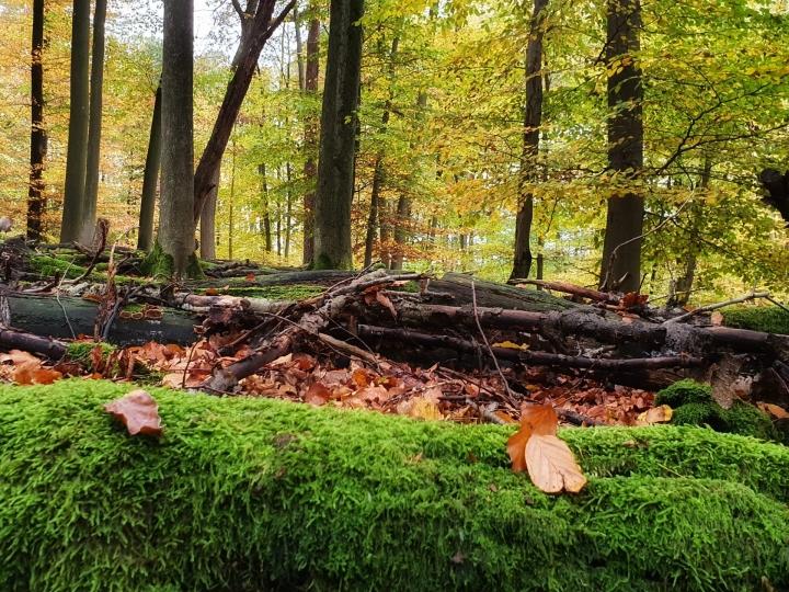 Herbststimmung im Wald um Höhr-Grenzhausen, Aufnahme von Ute Matschke-01