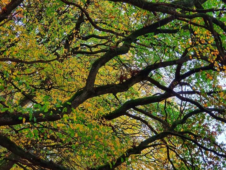 Herbststimmung im Wald um Höhr-Grenzhausen, Aufnahme von Ute Matschke