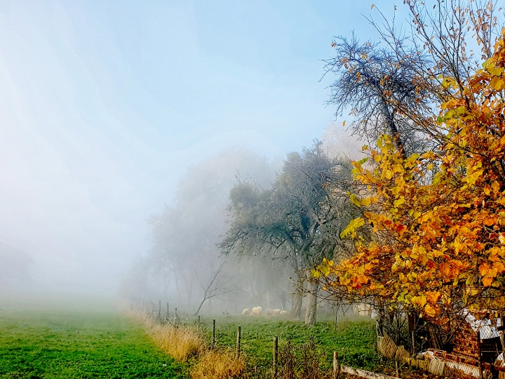 Höhr-Grenzhausen - Stadtteil Grenzhausen - Streifzug durch die Gärten, Foto von Ute Matschke