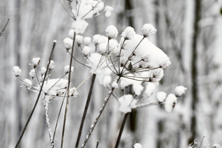 Winterlandschaft im Westerwaldmit Schneebedeckten Dolden