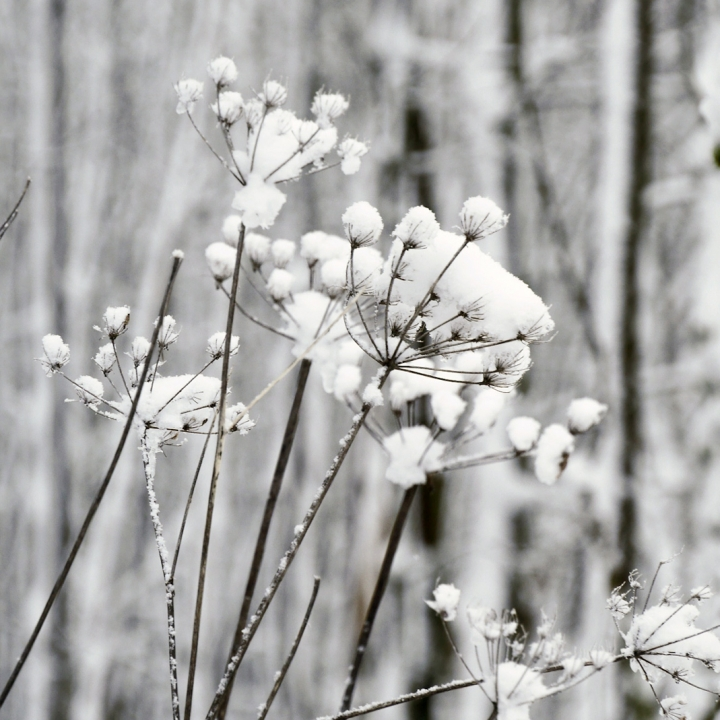 Winterlandschaft mit Schneebedeckte Dolden