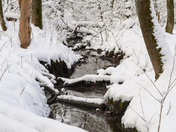 Ausflugsziel Westerwälder Seenplatte