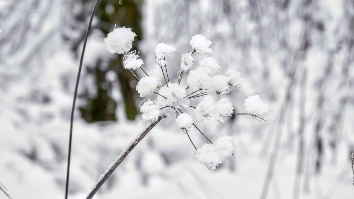 Winterimpression Westerwald