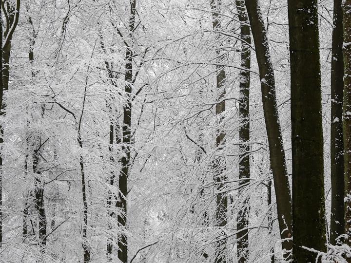 Schneelandschaft rund um Höhr-Grenzhausen und dem Westerwald